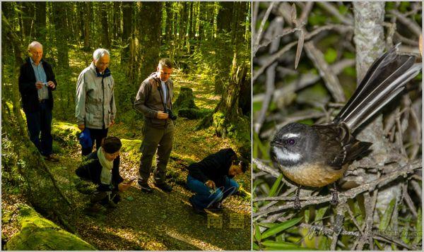 原始森林里的扇尾鸽和野生菌菇
