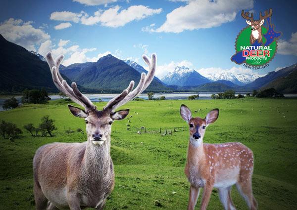 一鹿走来泉是风景宣传画